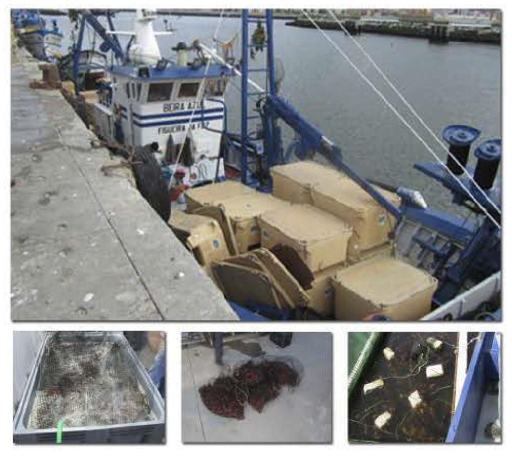 Pescados Amaya